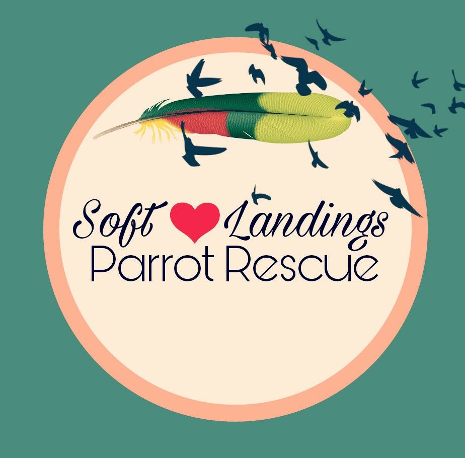 Soft Landings Parrot Rescue, Inc.